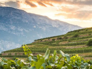 Sparkling Sustainability: Discovering Ferrari Wine in Northern Italy