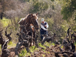 Romantically Rediscovered: Carmenère Month Celebrates the Resurgence of the Chilean Wine Varietal