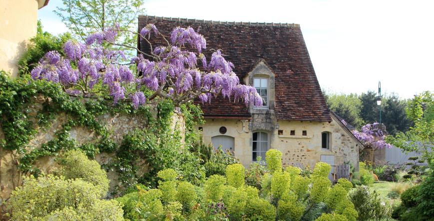 wisteria  sinencis, euphorbia characias