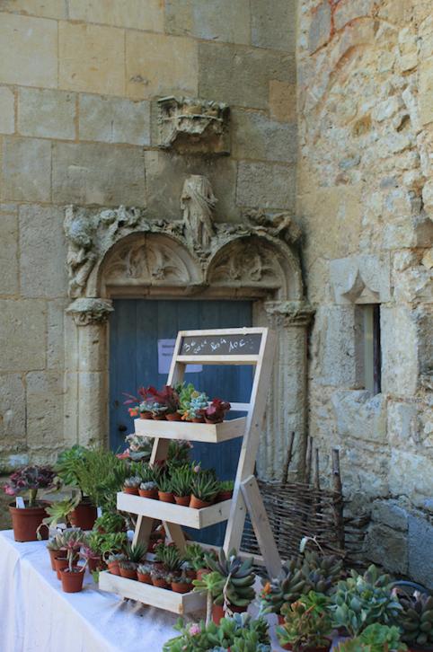 Succulent présentoir