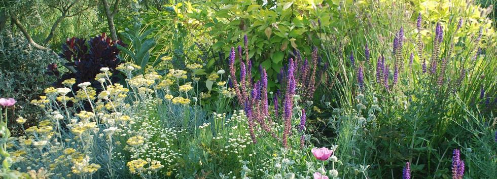 cornus alba aurea, salix rosmanifolia, salvia caradonna, helichrysum italicum...