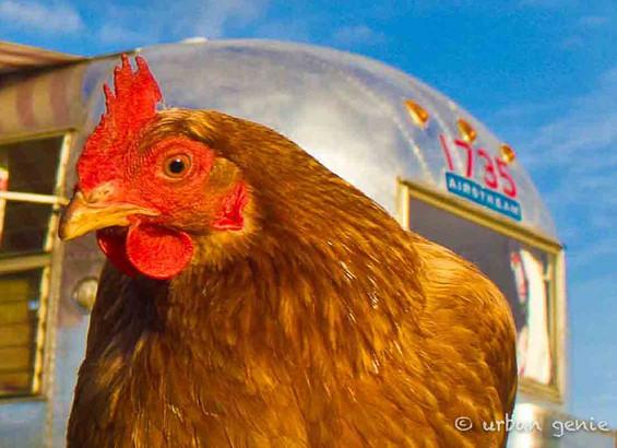 Airstream Chicken