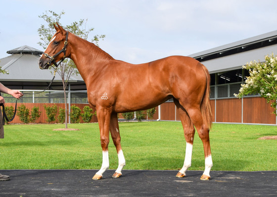 Inglis Classic Sale purchase