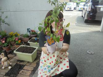 お野菜を植えました🍅