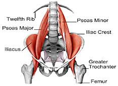 The Mighty Psoas
