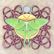 Luna_Moth_3.jpg