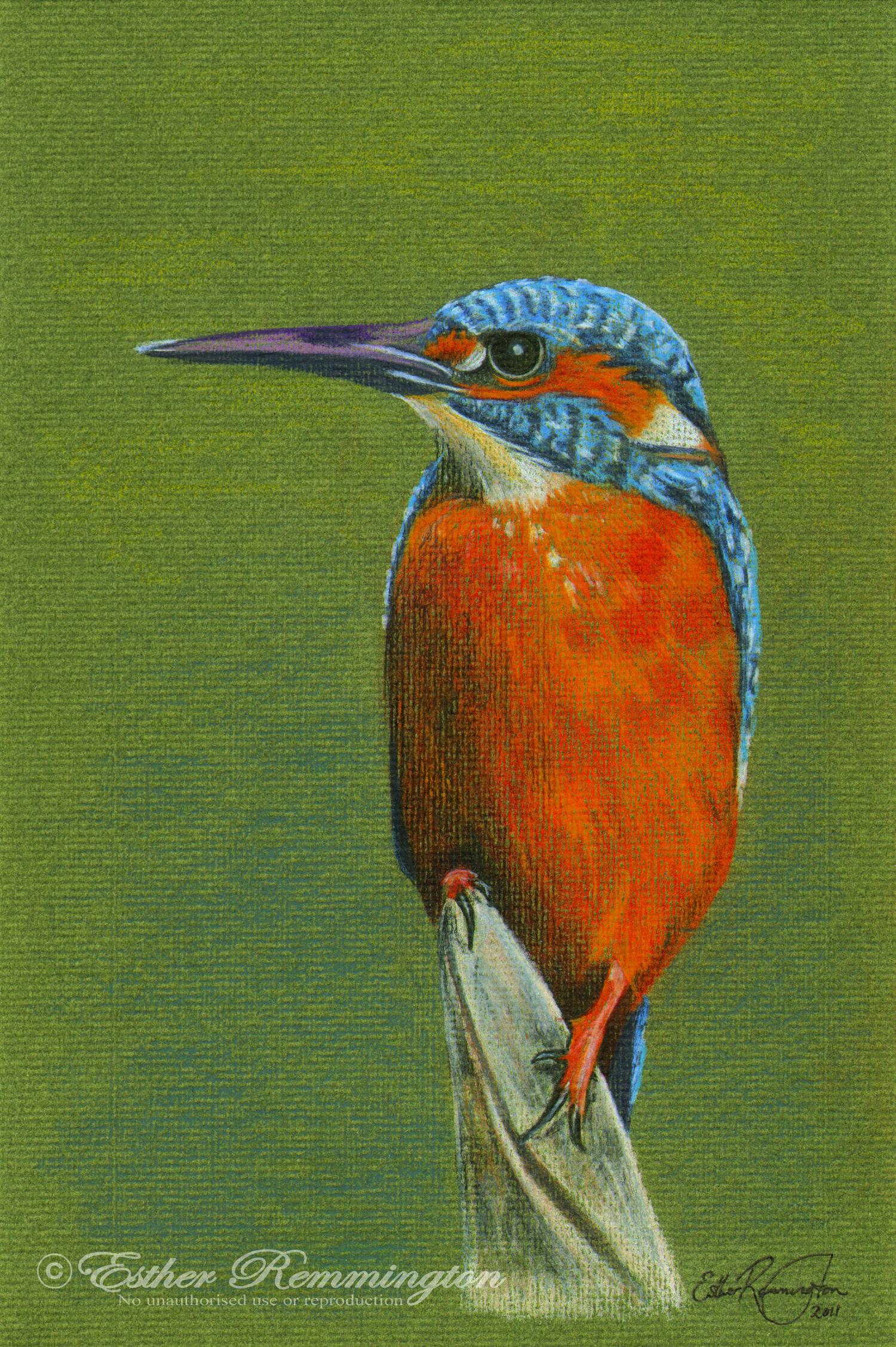 Kingfisher - 2011