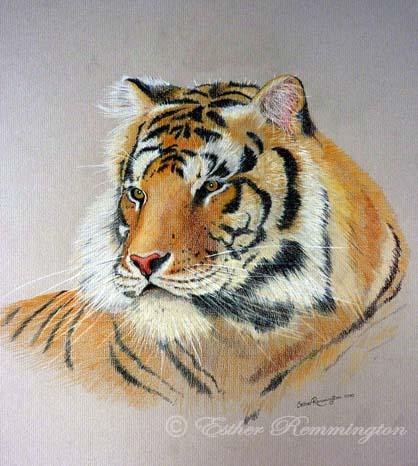 Tiger - 2010