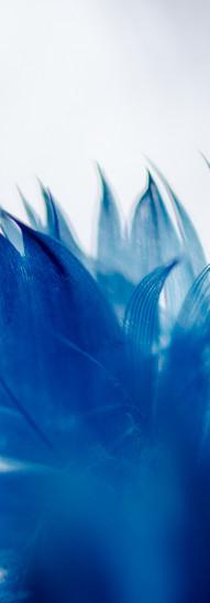 Bleu plume