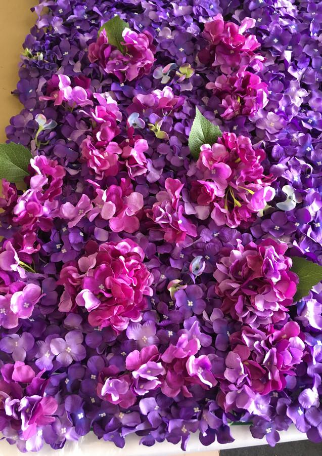 Purple Flower hydrangea wall