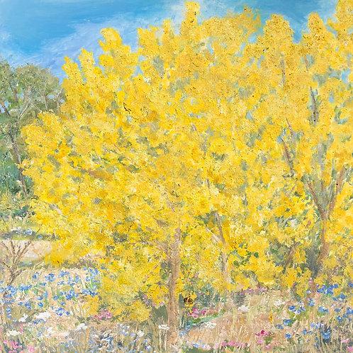 Mimosas au printemps