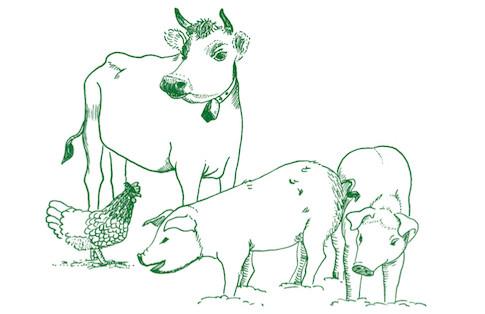 """Illustration """"Webseite Biobauernhof"""""""
