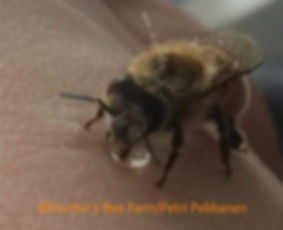 bee throwing up
