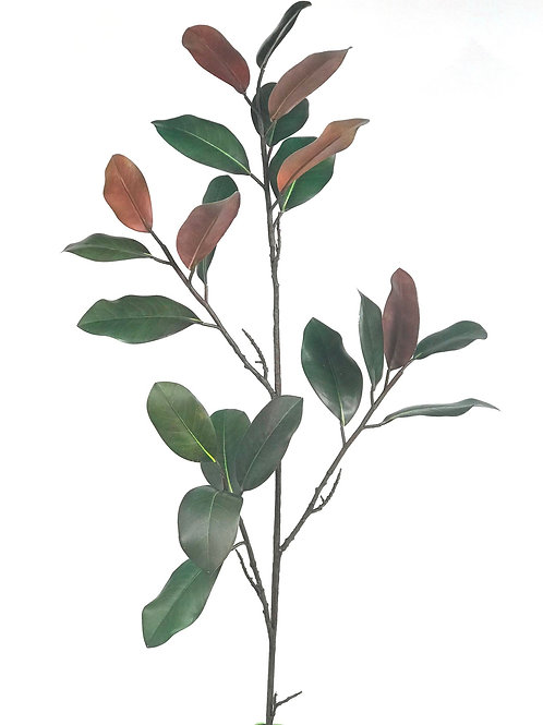 Magnolia Leaves Large Branch