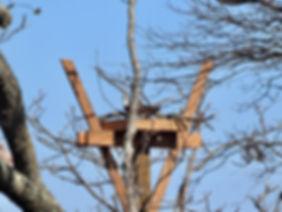 osprey on nest.jpeg