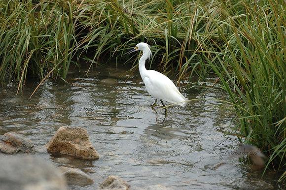 Egret - Membership