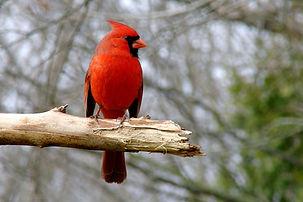 Bird-Walk.jpg