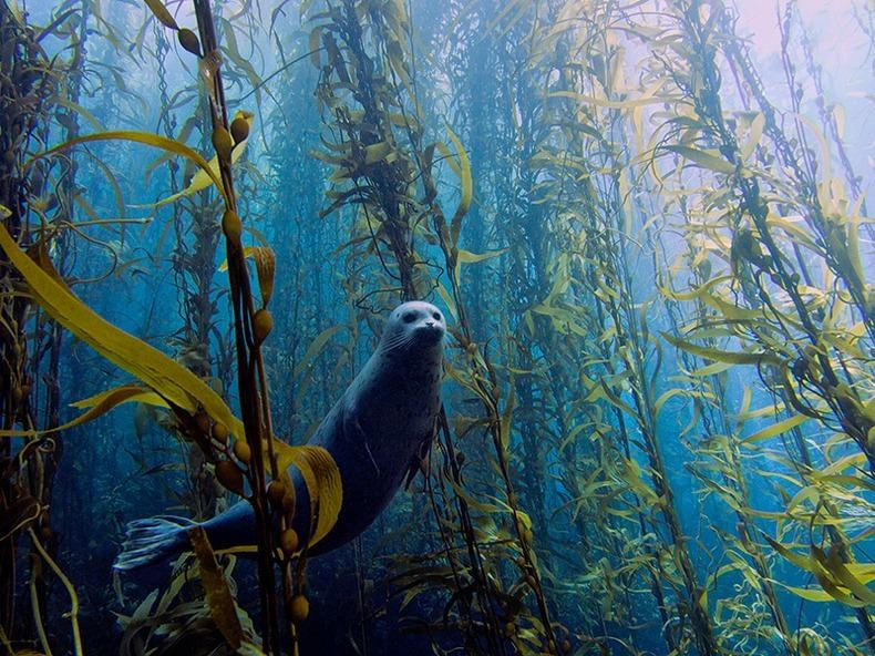 Kelp and Seagrass Protected by Safe Anchor Mooring Systems