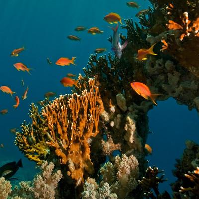 IntelliReefs: Coral Restoration        Nano Tech
