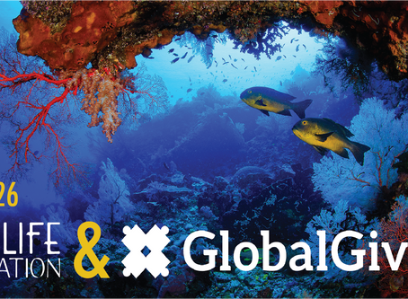 Global Giving & Reef Life Foundation