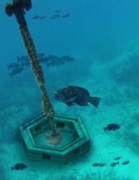Boat Mooring fish habitat