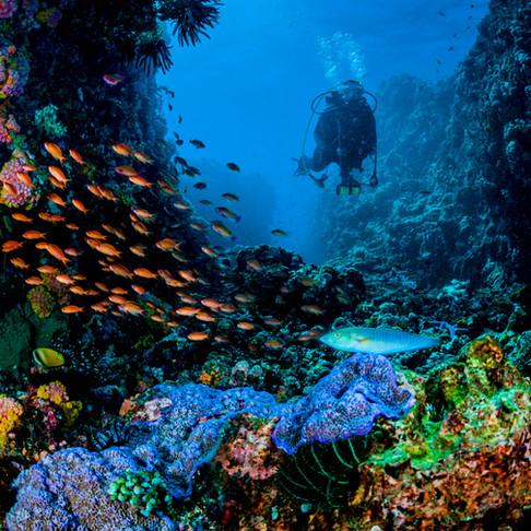 IntelliReefs Coral Reef Systems: NanoTech Analysis 2020
