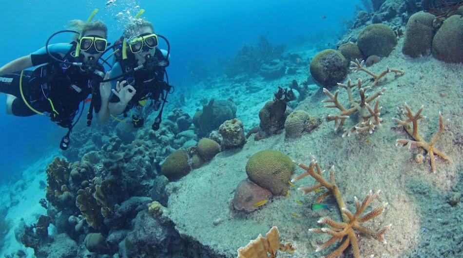 #Scuba #Dive Safe Practices