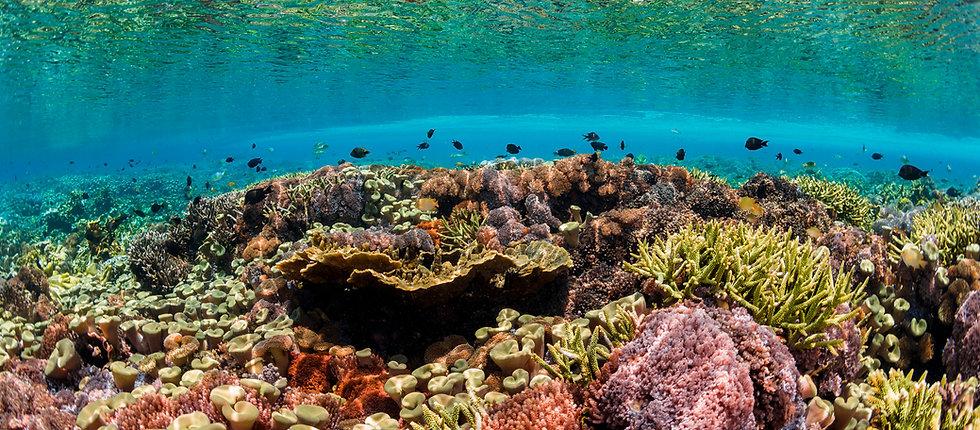Coral Reef Restoration Reef Life