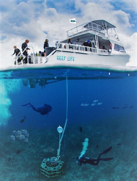 Scuba Dive Safe Mooring Systems
