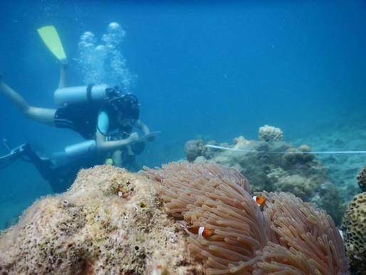 Michelle Sanders: Ancient Turtles to Ocean Wildlife