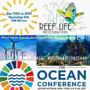 Reef Life Presentation UN Oceans 2017
