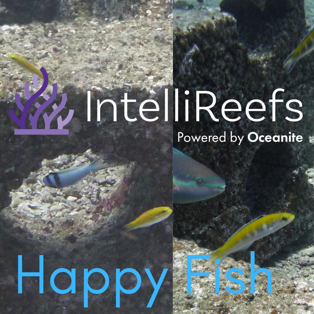 IntelliReefs Happy Fish 3