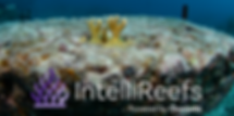 Coral _Reeflings_ on IntelliReefs Jan 20