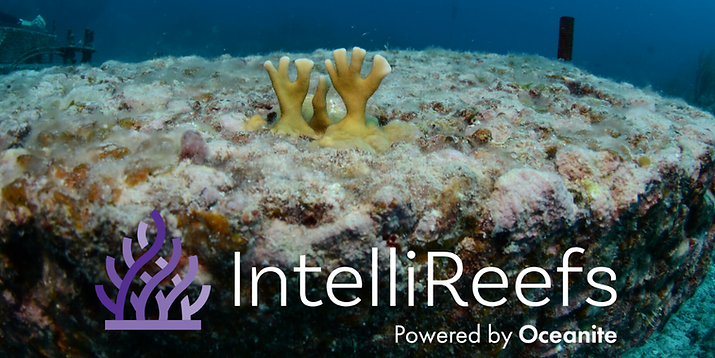 Coral _Reeflings_ on IntelliReefs Jan 20