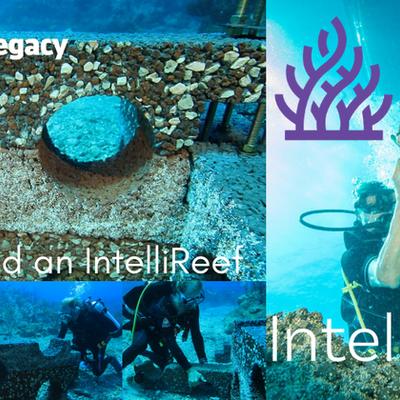Plant A Million Coral: IntelliReefs
