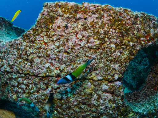 Blue Carbon Reef Innovations