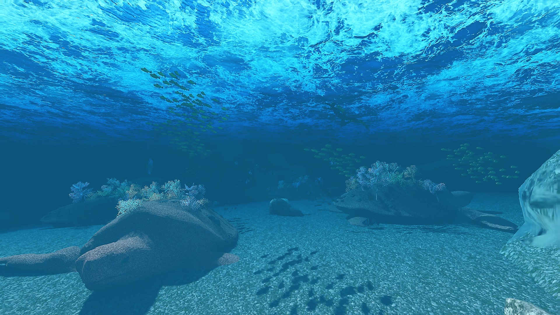 Microfragmentation domes in reef
