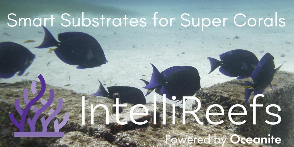 Intrllireefs Smart Substrates for Super Corals
