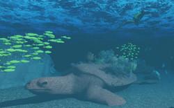 Grandfather Tortuga Coral Lab