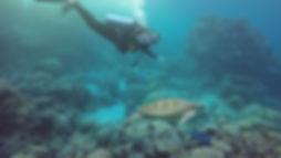 turtledive4.jpg
