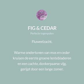 NL-Fig&Cedar.jpg