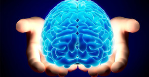 Guest Blogger: Our Amazing Brain!