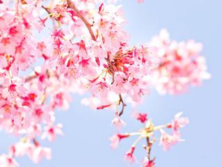 4/9(土)野外保育りんごっこ 入園を祝う会のお知らせ