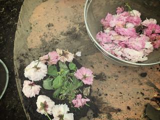 ★5月17日(木)いけとおがわ 親子広場いちご 泥んこ遊びとミネストローネ