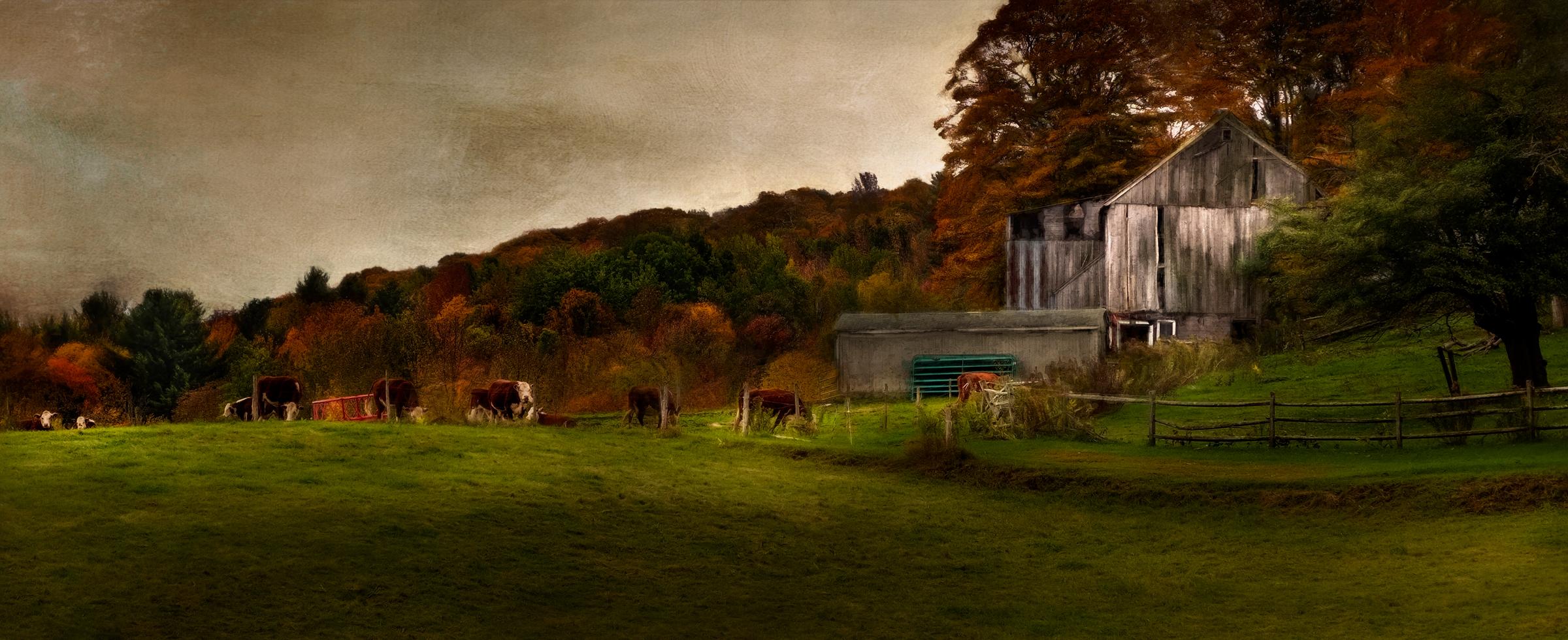 Rembrandt Cows