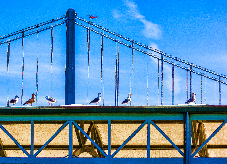 Birds and Whirlybird at Bay Bridge
