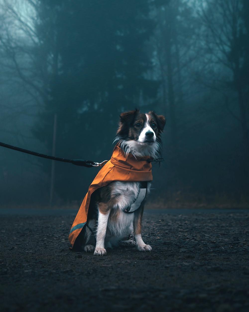 Psia sesja fotograficzna