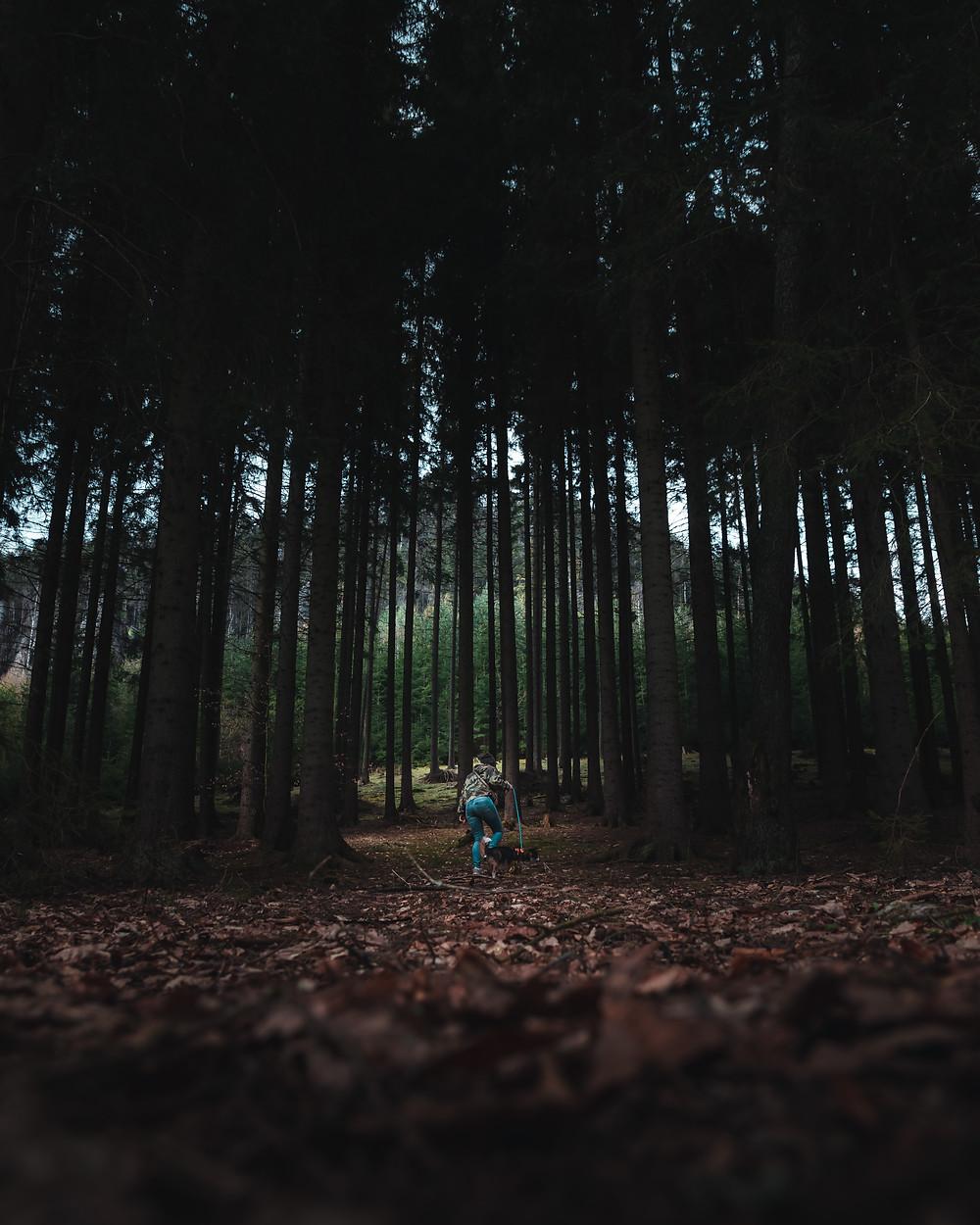 Dziewczyna z psem w lesie