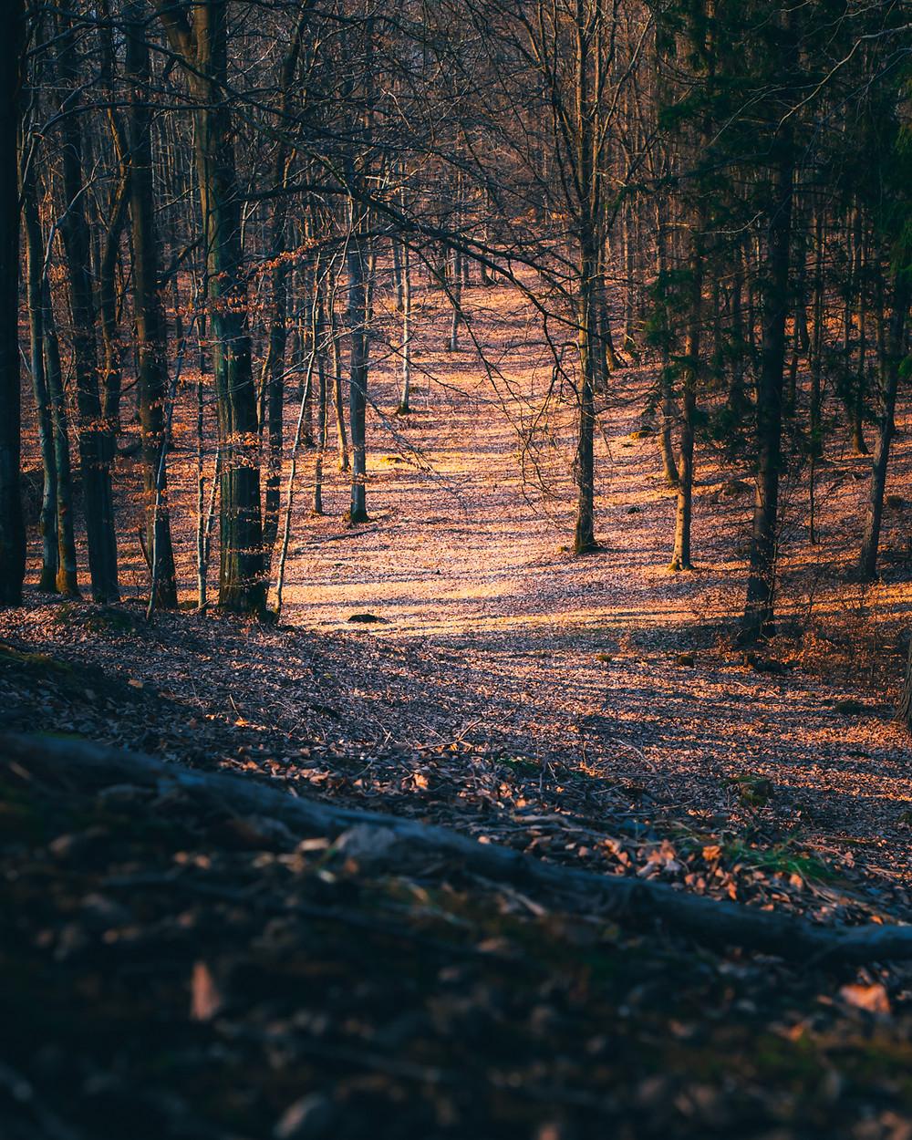 ciekawy las