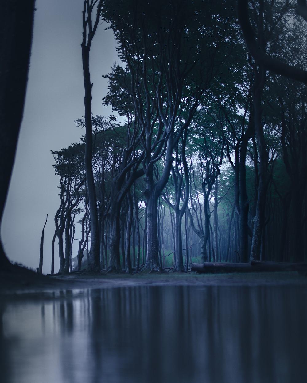Dark, moody forest